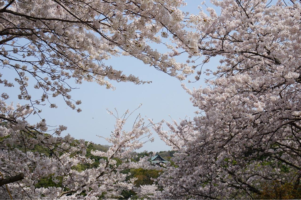 信貴山ホテル側からの眺め