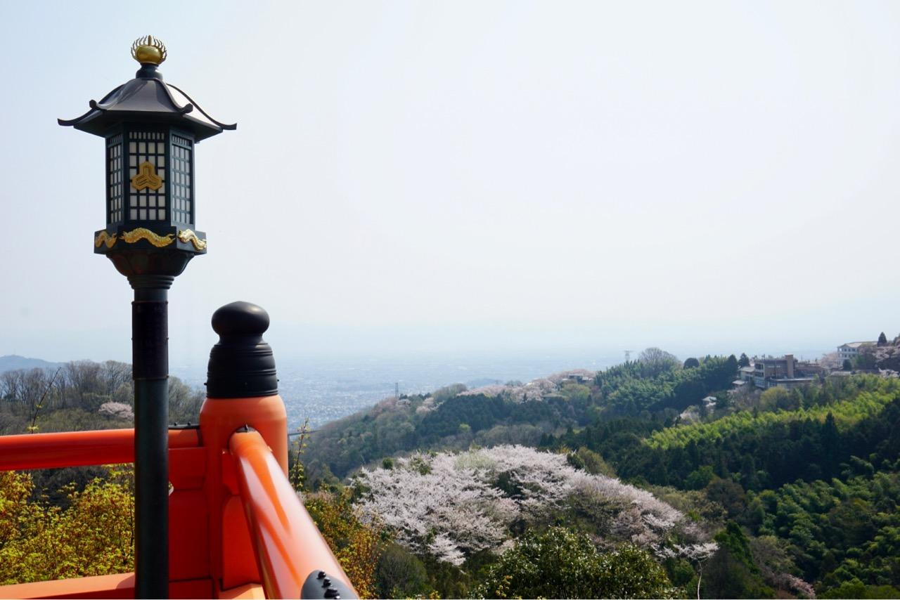 周辺の信貴山のどか村なども桜が満開です。