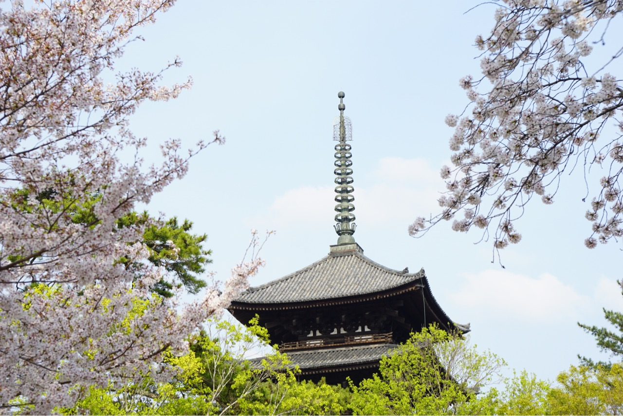 五重塔と桜。とても綺麗で本当に素敵でした。