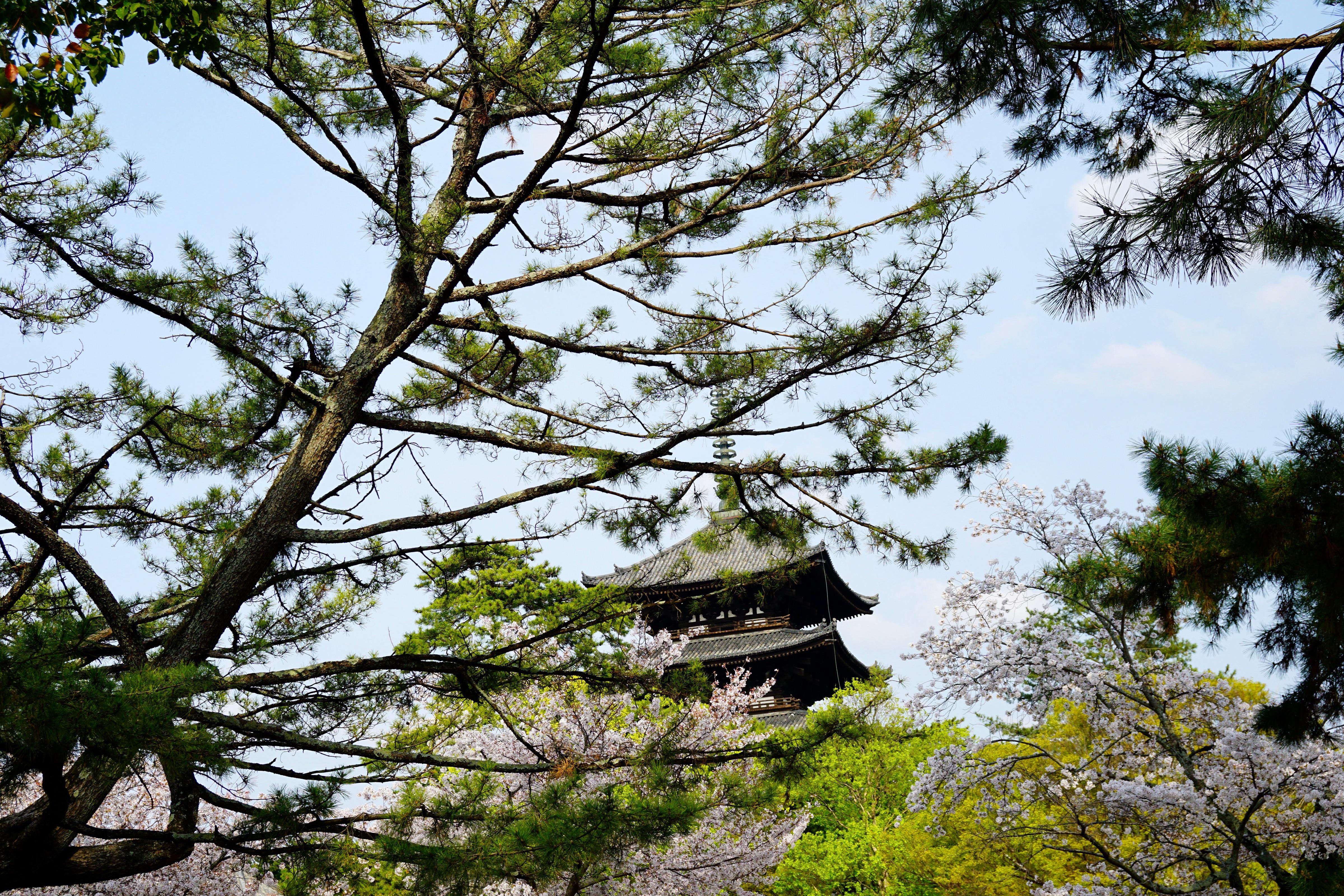上の写真の場所から五重塔はかなり離れていてこんな感じ。