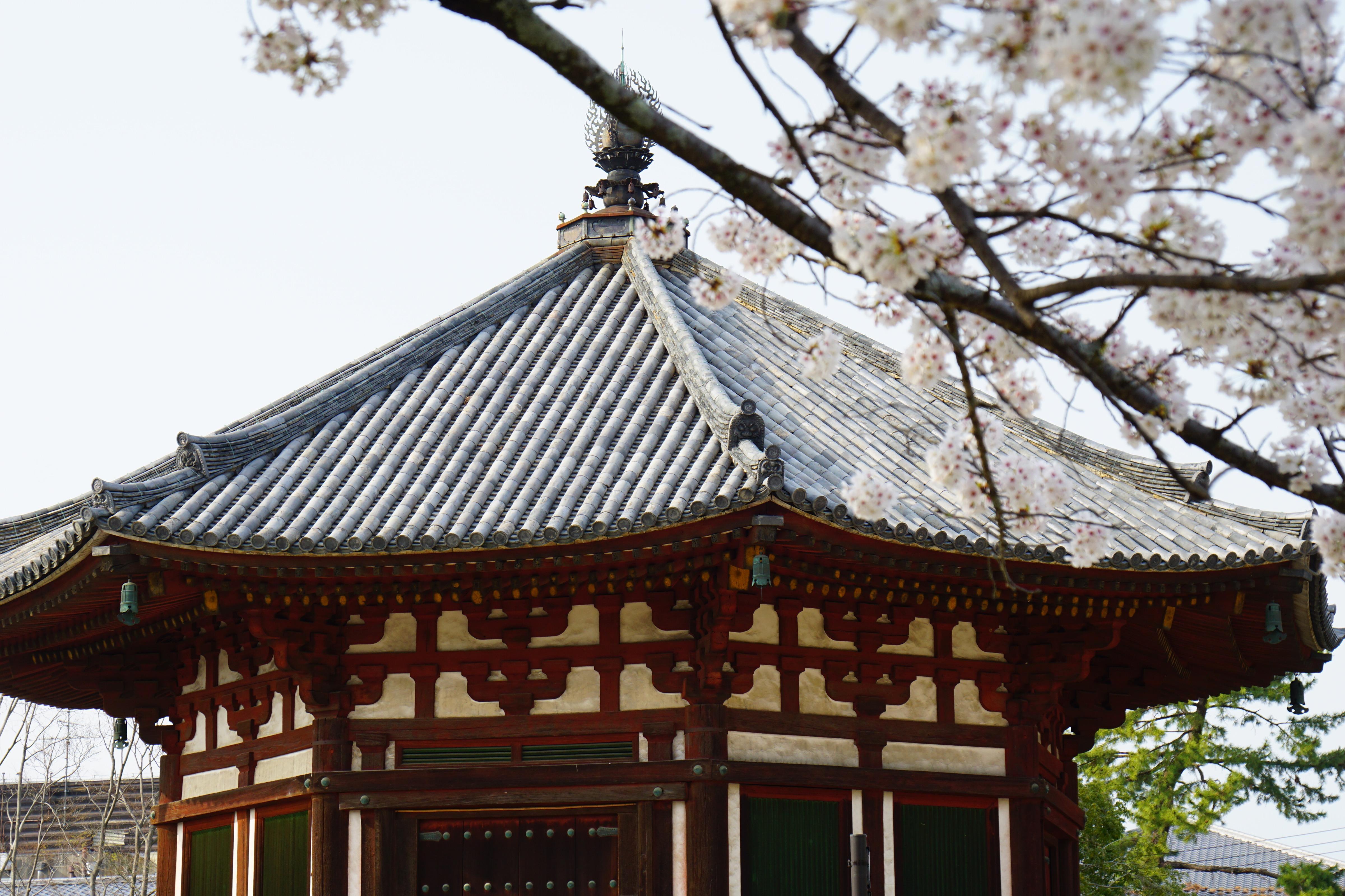 北円堂 この辺りは秋の紅葉が素晴らしいです。桜は少なめですがそこが上品です。