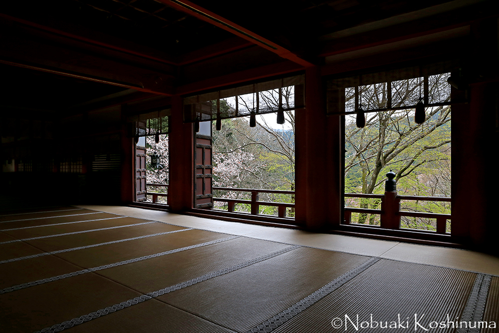 拝殿からも桜を眺めることができます。