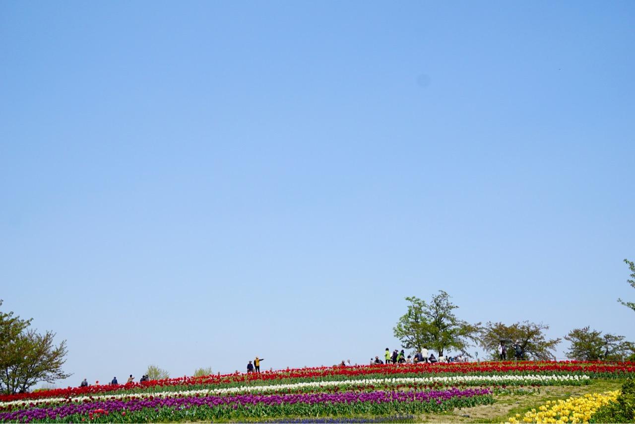公園内はとても広くてチューリップ以外にもこれから咲く花しょうぶなども手入れされていました。