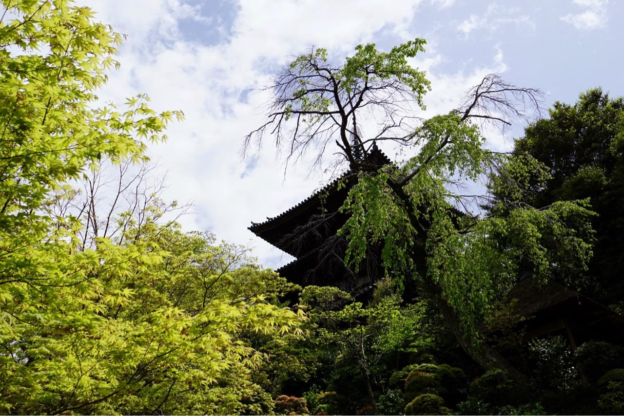 三重塔 新緑の季節は特に美しいですね。