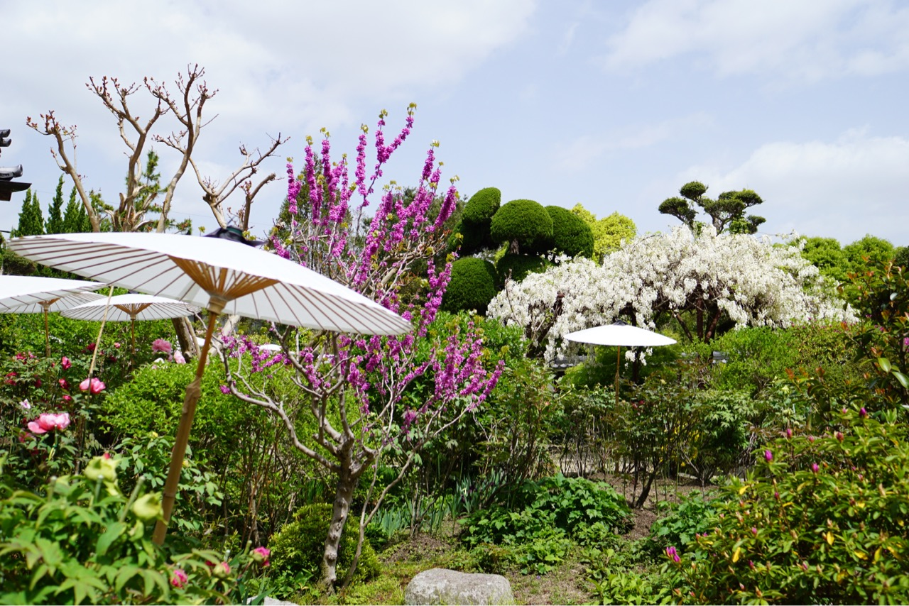 ボタンの日よけの傘が可愛くて、そして色とりどりのお花もとても綺麗でした。