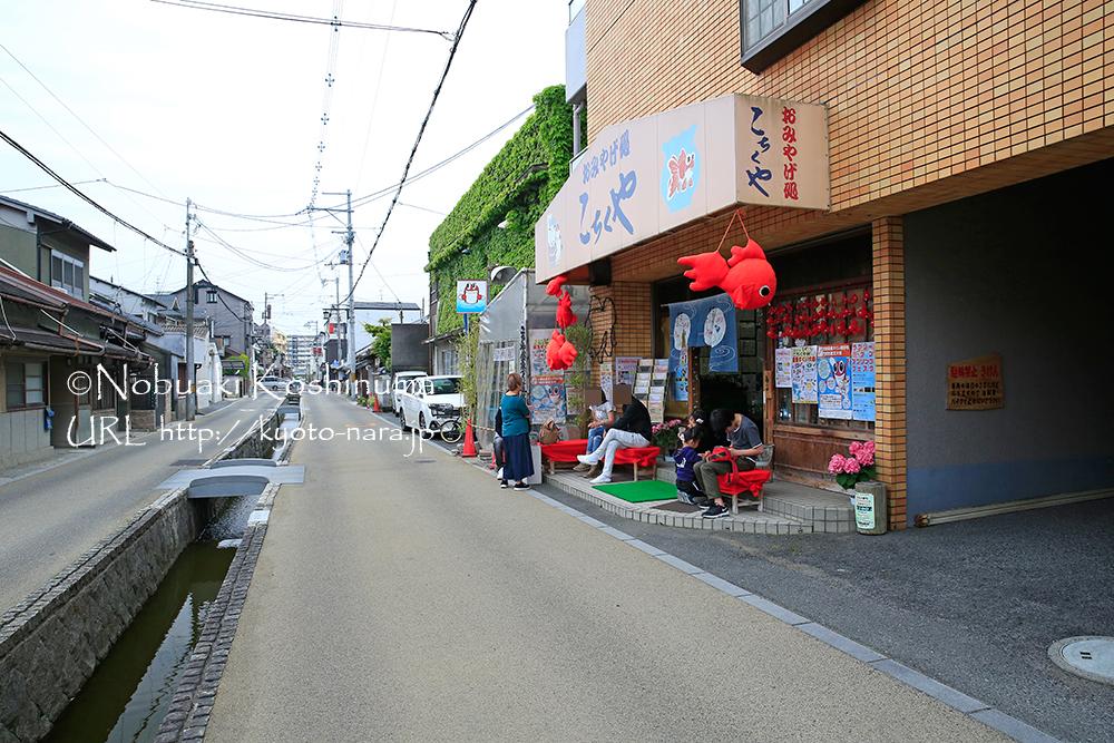 金魚すくい道場として有名な「こちくや」。1回50円で金魚すくいの練習ができます!近鉄郡山駅より6分!