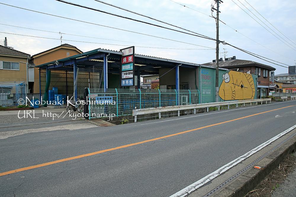 郡山城から尼ヶ辻方面に向かう途中にも金魚や熱帯魚を扱う「アクアトレンディ」というお店があります。