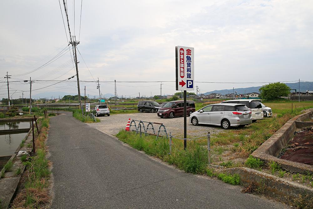 「郡山金魚資料館」専用の駐車場に車を停めていきます。ここから歩いて3分くらい。