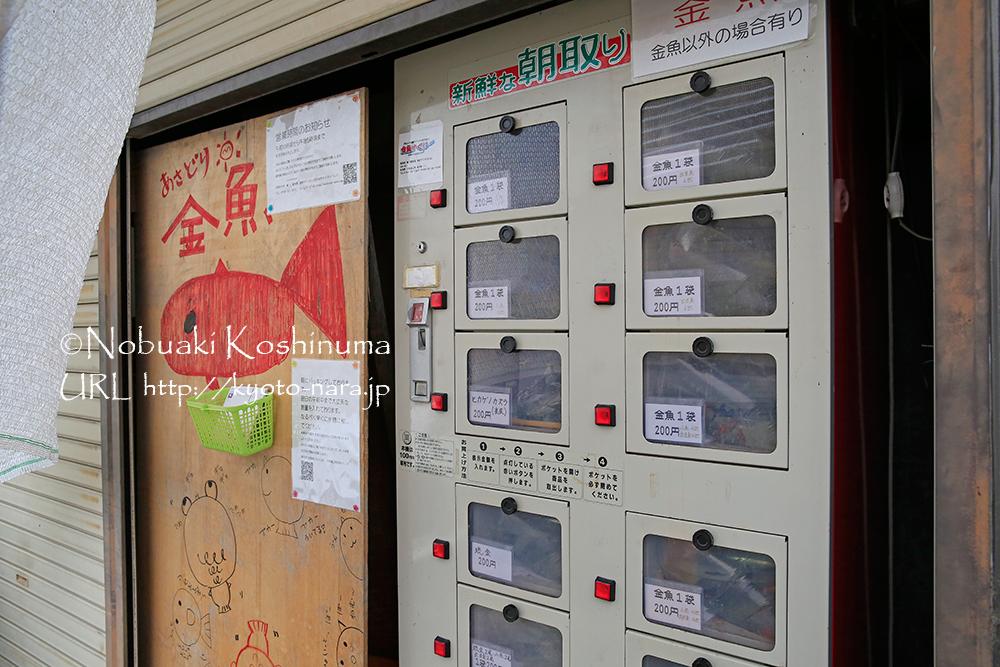 郡山金魚資料館から徒歩1分のところに嶋川養魚場があり、なんと金魚の自動販売機が設置されていました。