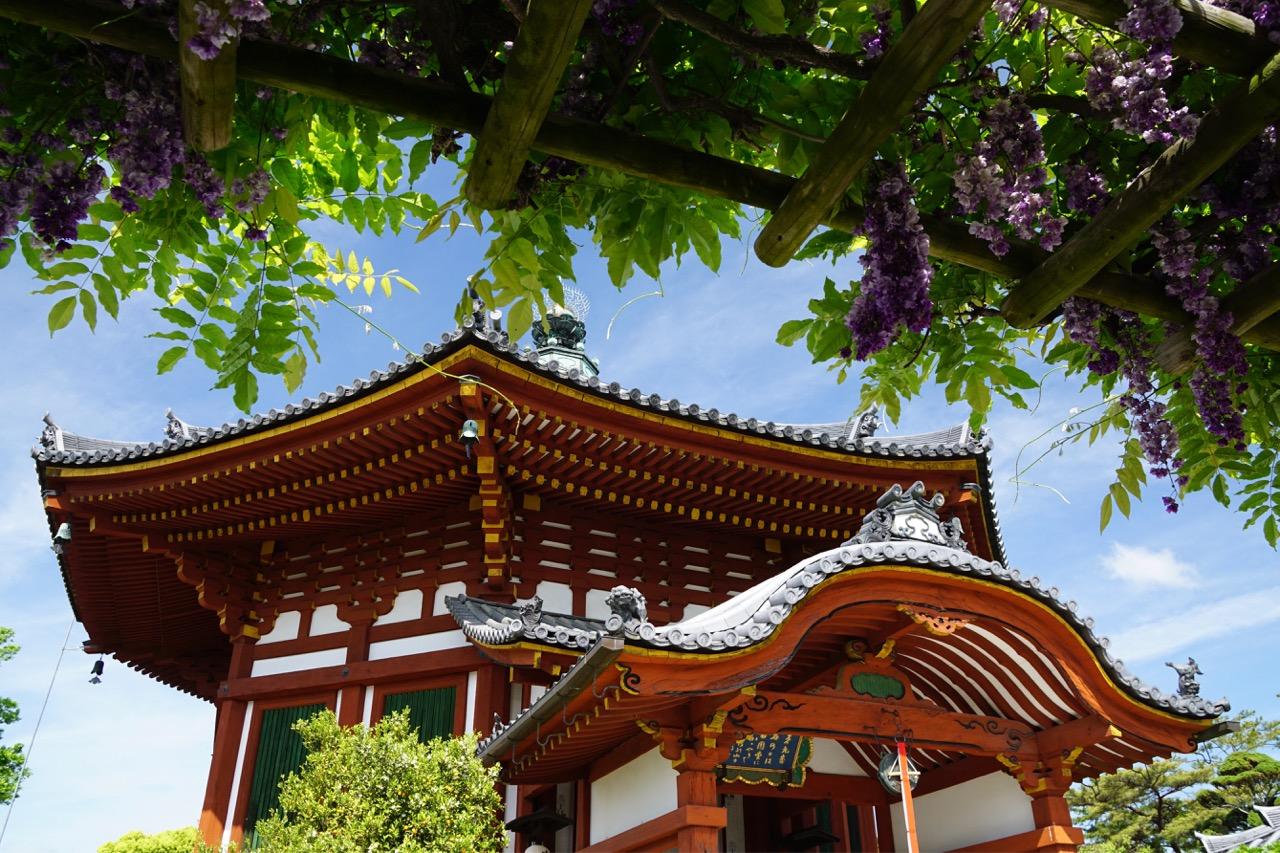 興福寺へ。南円堂の藤は南都八景にも数えられます。
