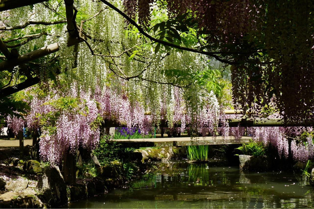 まずは午前中の空いているうちに万葉植物園へ。