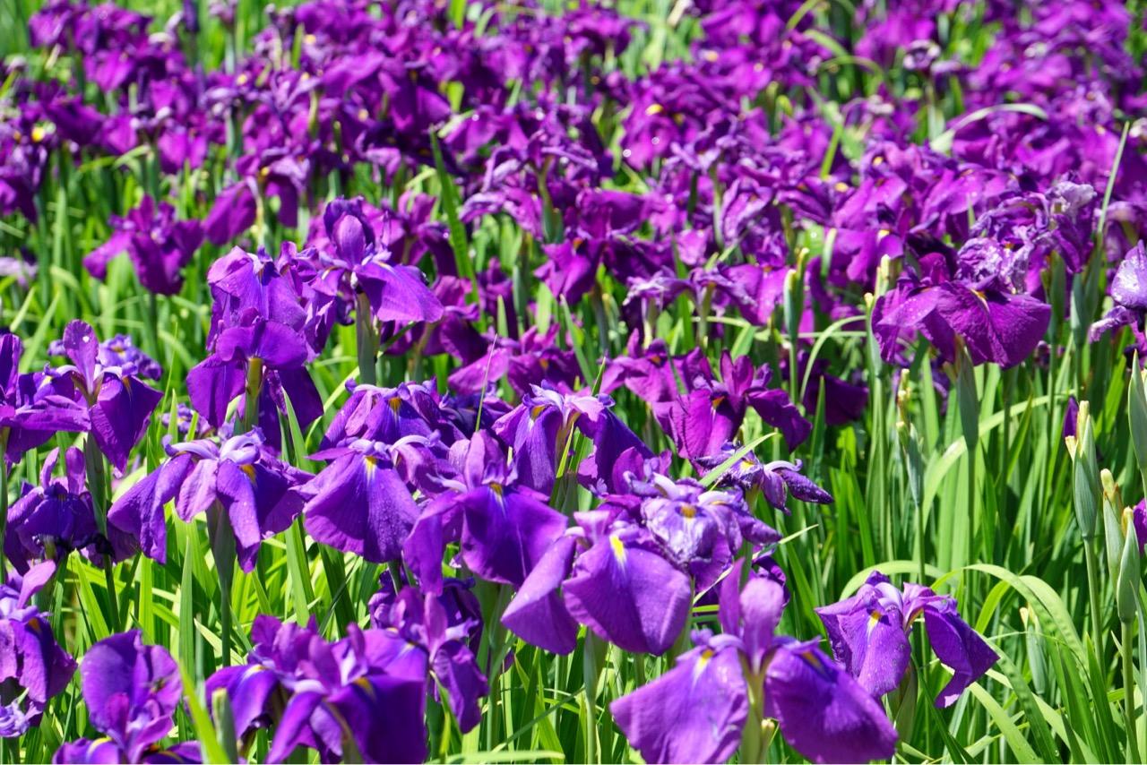 同じ紫でも少しずつ色が違うのがわかりますね。