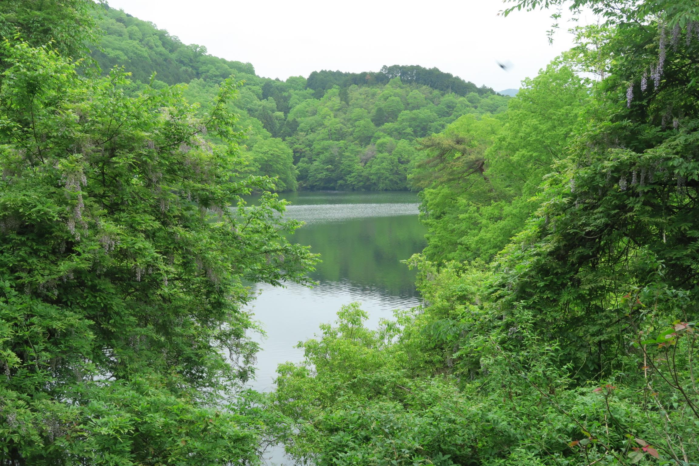 車で走っていると新緑の間から見える湖が美しくいい感じです。