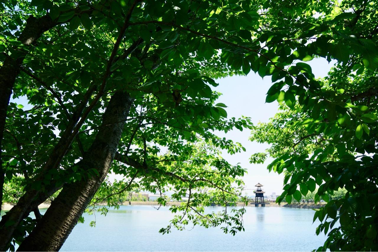 池に浮かぶ姿は悠久の歴史を感じます。