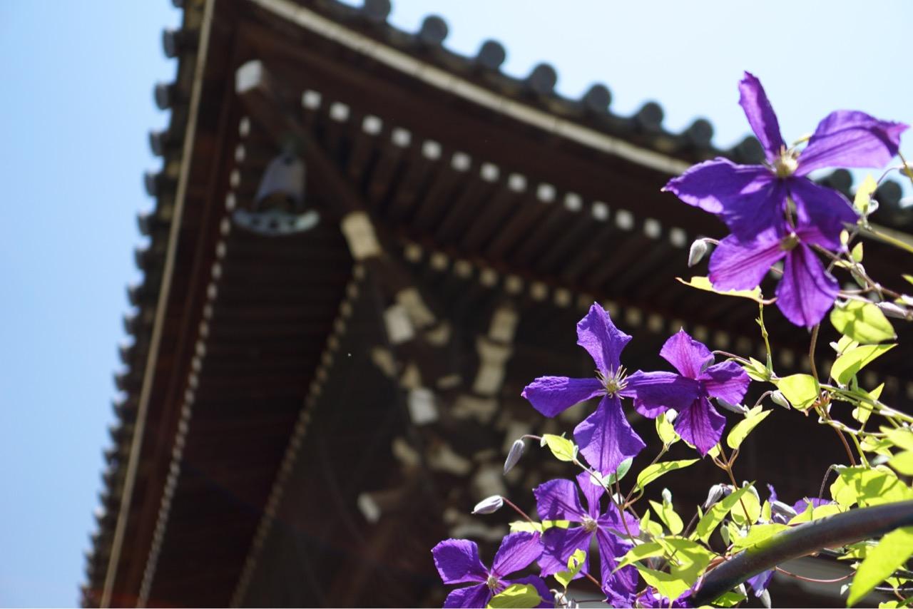 本堂の拝観料は300円ですが境内やバラ庭園は無料です。