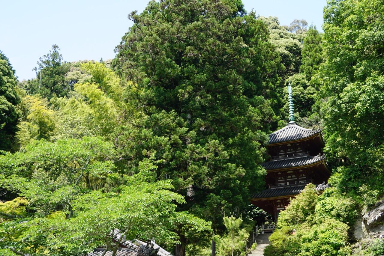 松尾寺のバラを見に行ってきました。