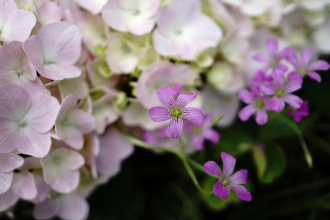 小さいお花もたくさん咲いていましたよ。