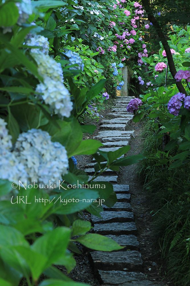 スベリやすい石もありますので、注意をして歩きましょう!