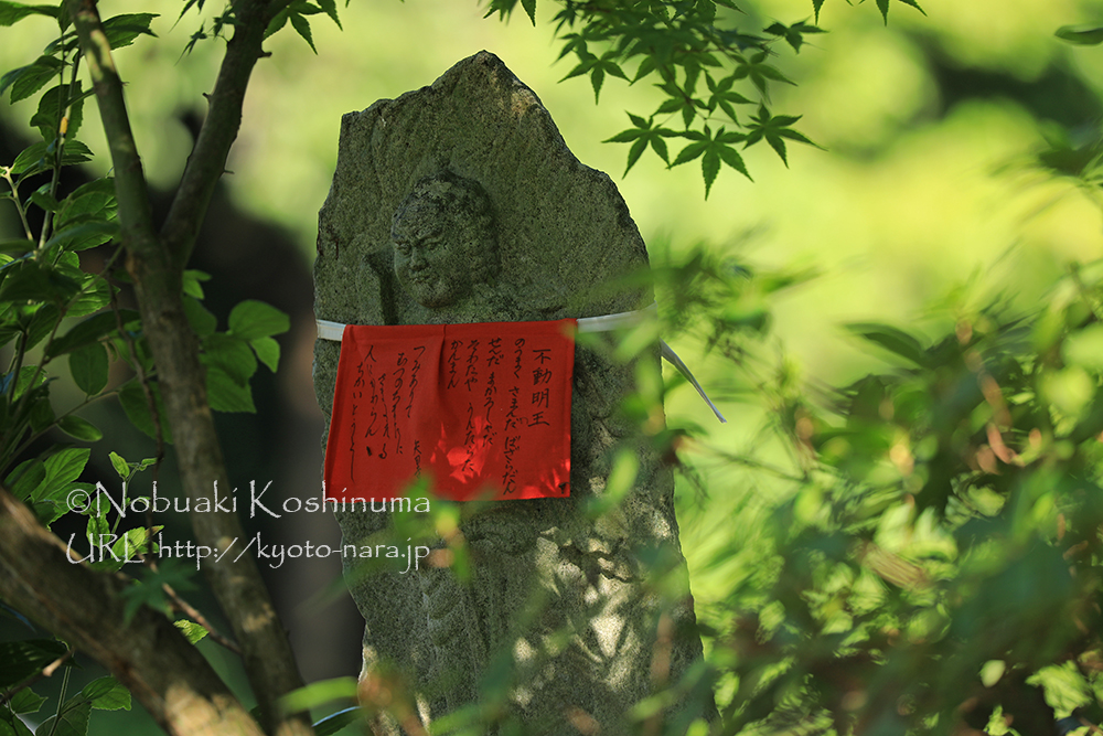 早朝、撮影をしていると地元のおじいさんが「矢田寺で一番りりしい顔をした石仏」と教えてくれたもの。