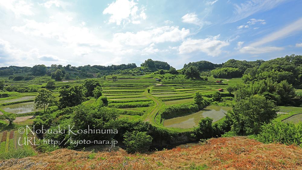 美しい田園風景が拡がります。