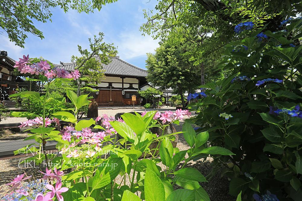 日本最初の仏教寺院「飛鳥寺」。蘇我氏の氏寺。日本書紀には法興寺、元興寺、飛鳥寺と3つの呼称が