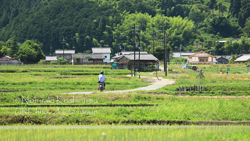 飛鳥寺周辺の田園風景。