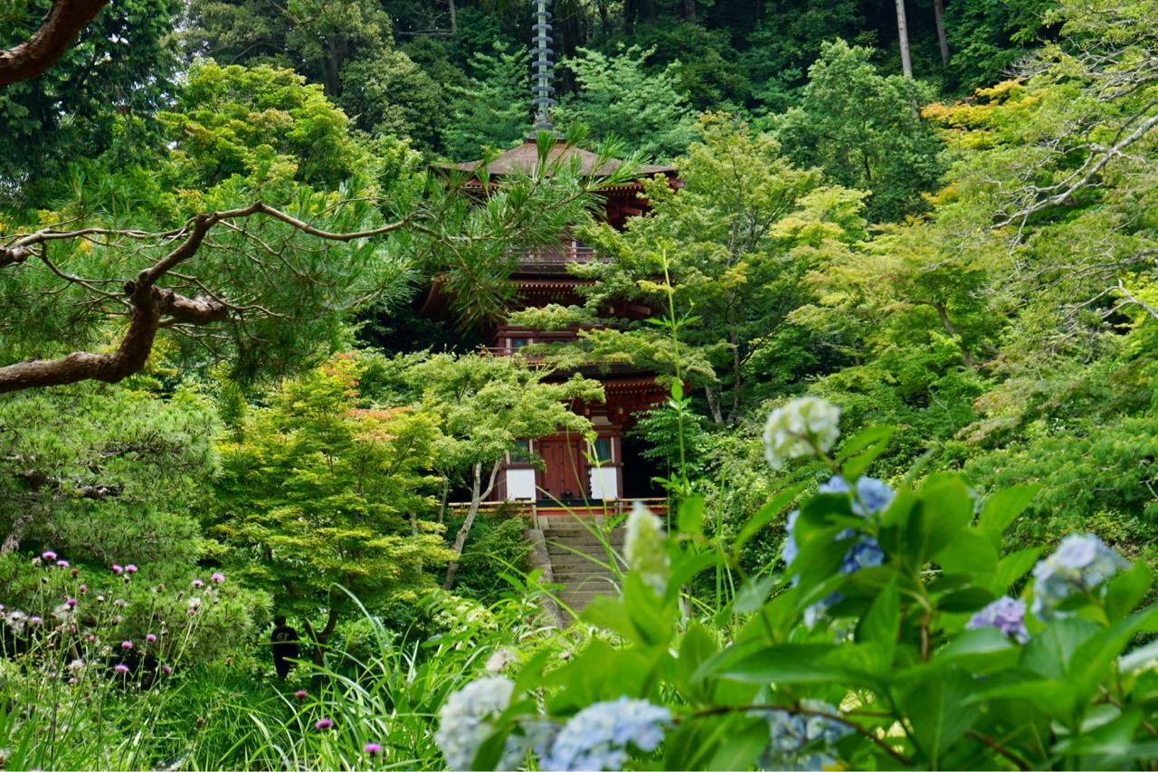 こちらも三重塔があります。境内にはお花は少ないですが、こちらは秋の紅葉が見事です。