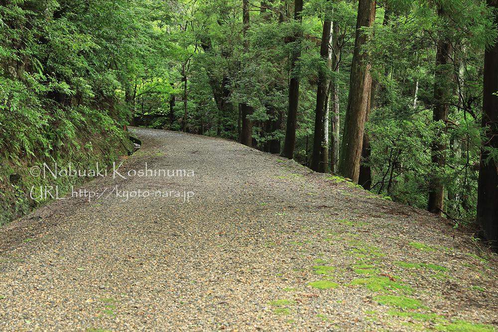 連日の雨で、水分を多く含んだ遊歩道。注意をして歩きましょう。