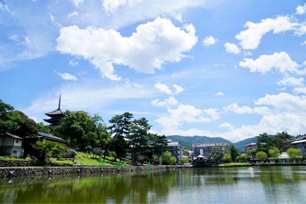 奈良公園は緑が輝きとても綺麗でした!