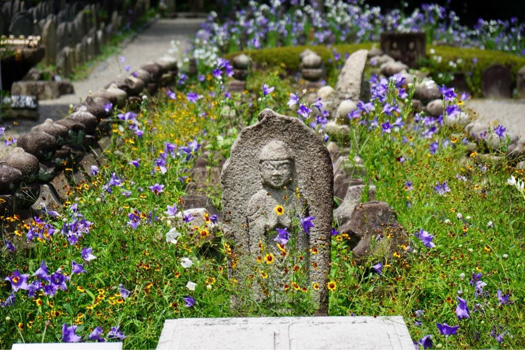 元興寺では桔梗が見頃を迎えています。