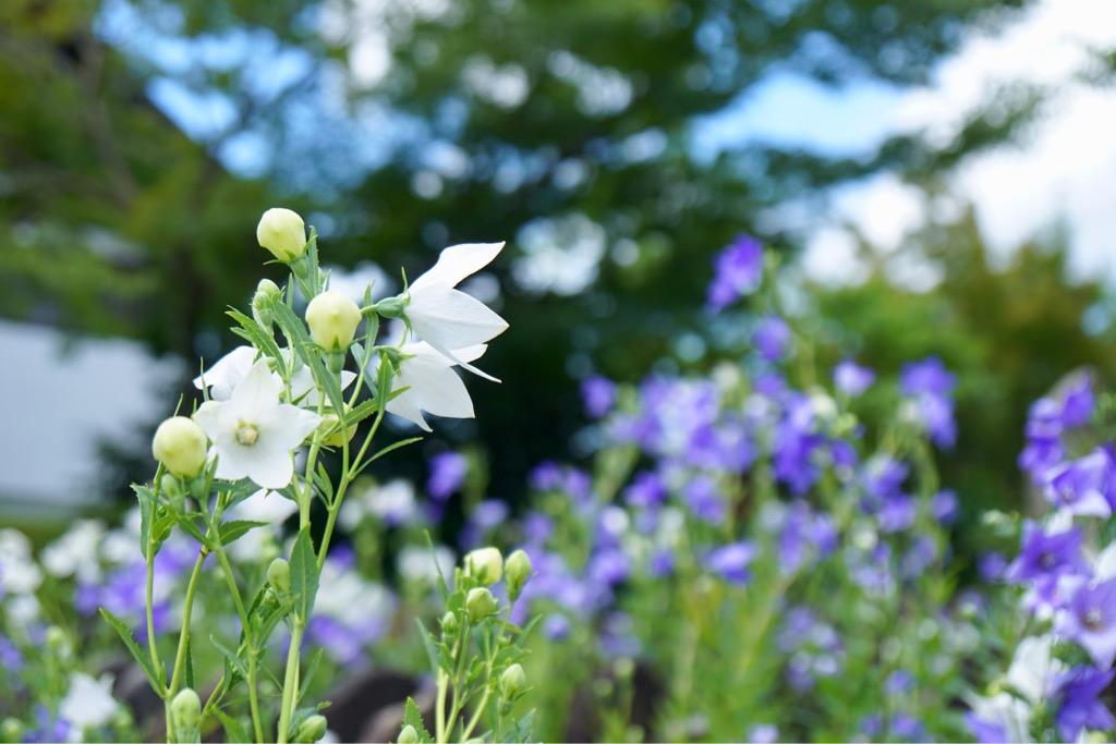 たくさんのブルーの花がとても爽やかで涼しげでした。