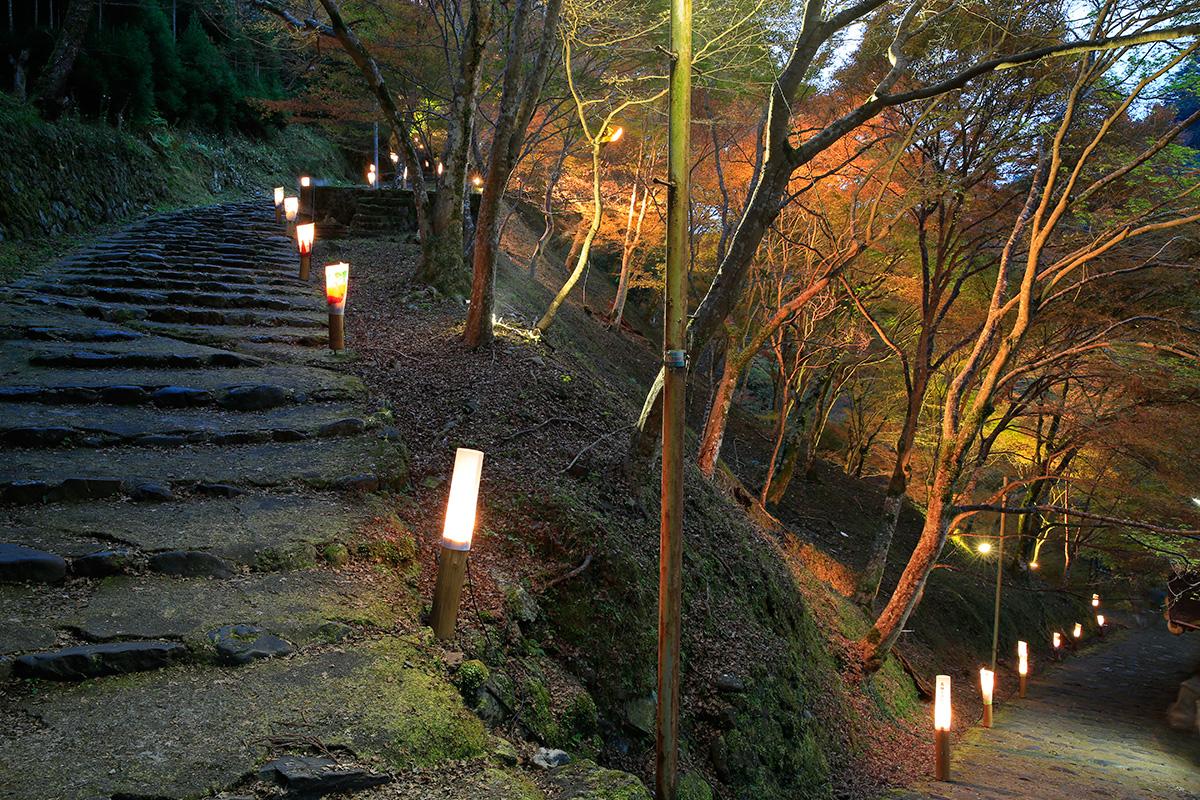 神護寺・金堂夜間特別拝観と境内ライトアップ。長い階段ですので、ライトアップを楽しみながら歩きました。