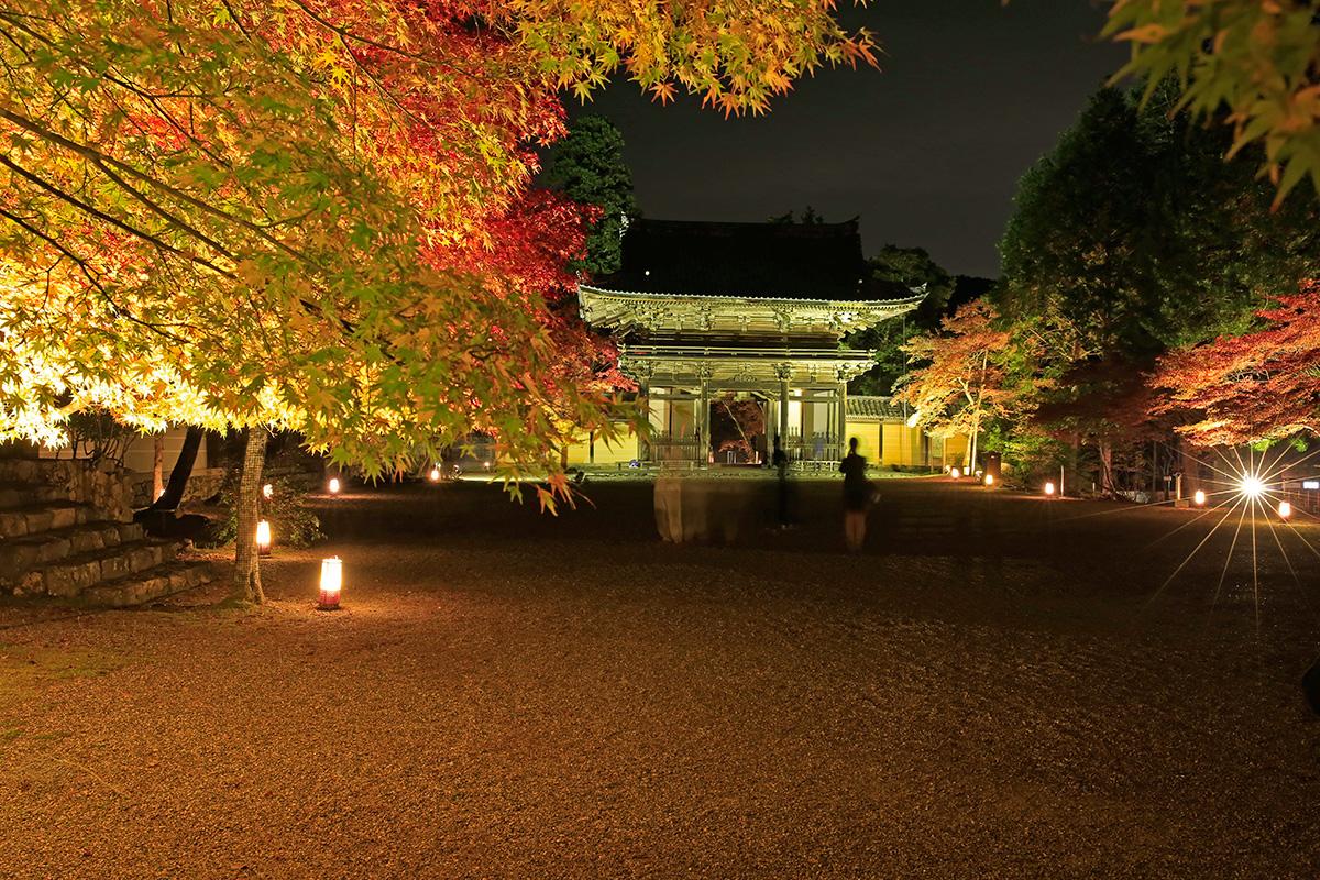 重厚な門と紅葉が照らされて綺麗でした!
