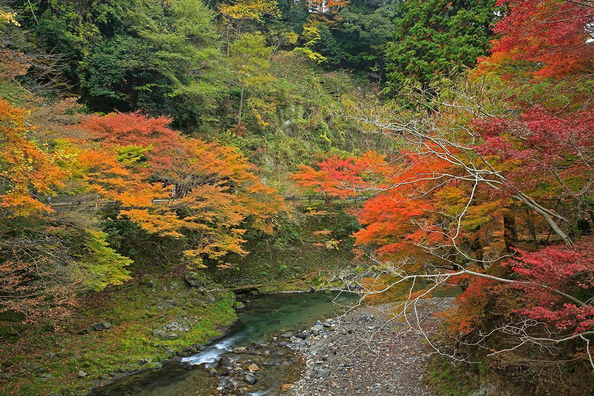橋の上から見る紅葉も見事でした。これから先が楽しみです!