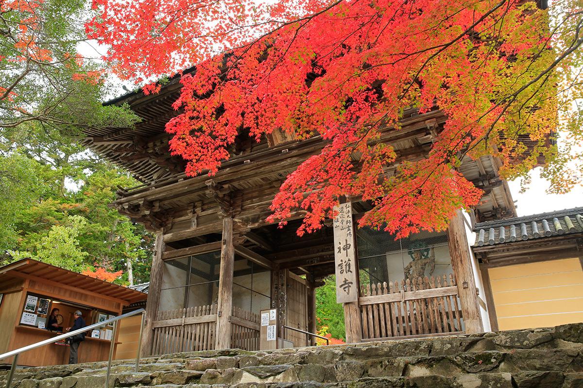 紅葉の名所と言われる神護寺。門前から雰囲気が素晴らしいですね。