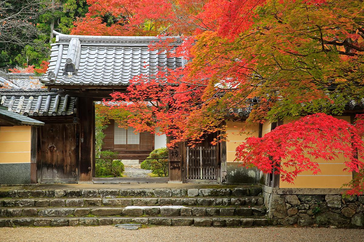 神護寺本坊入口もきれいに彩られていました。