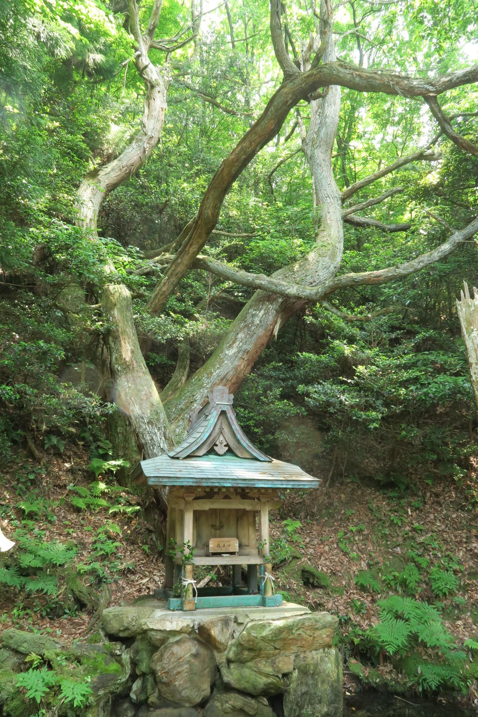 龍を想起させる大木がある藤井田龍王社。