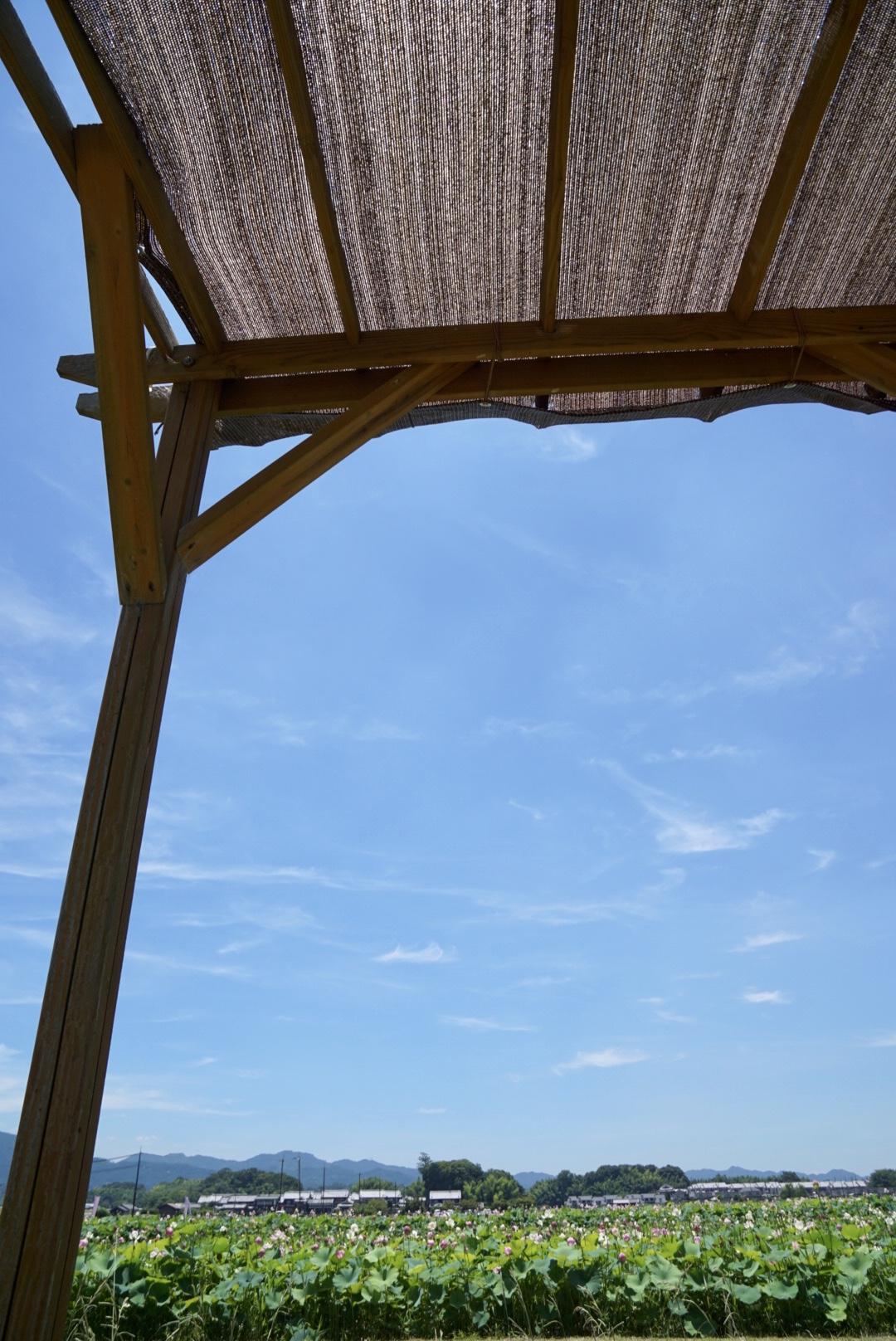 とにかく暑い!影がほとんどないので暑さ対策は必要です。