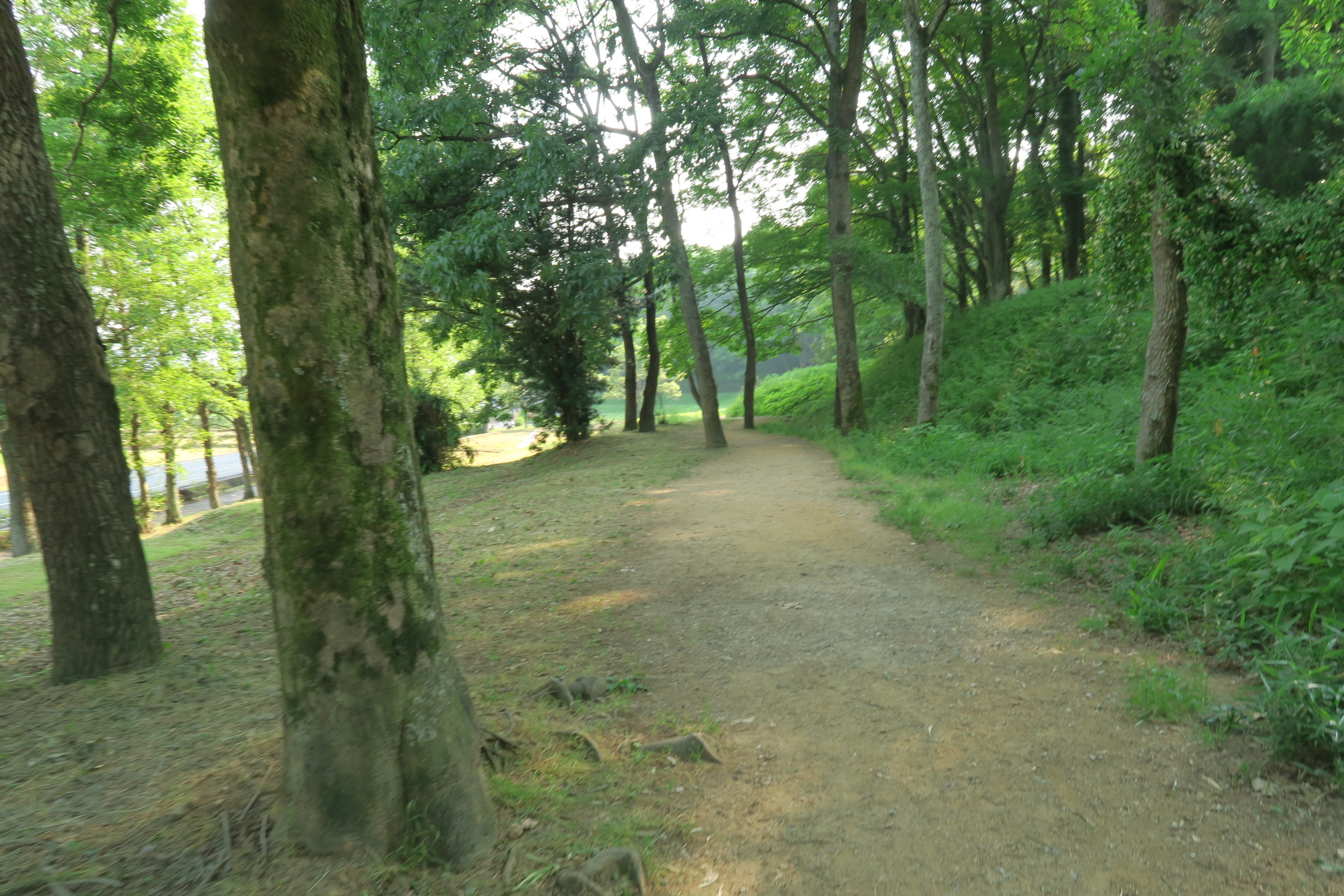 整備された非常に歩きやすい公園です。