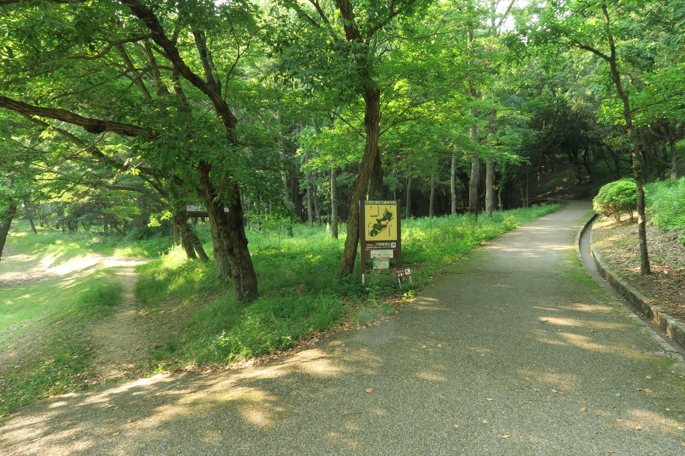 川原展望台にはどちらからでも行けますが、左側の道を選びました。