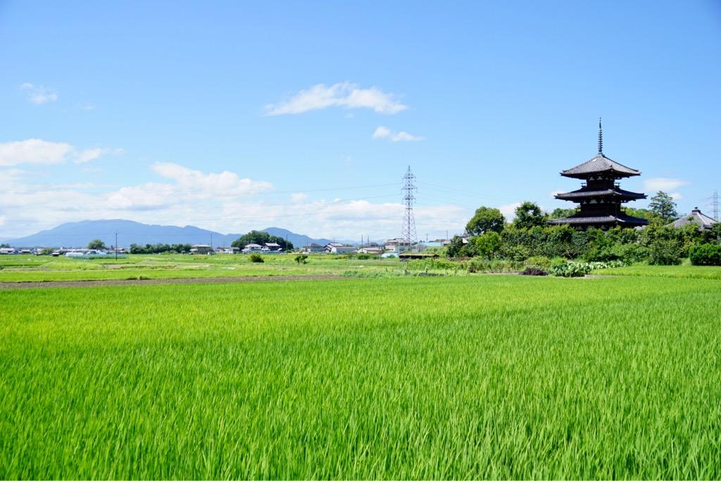 法起寺と葛城山 まだ緑が美しい水田です。