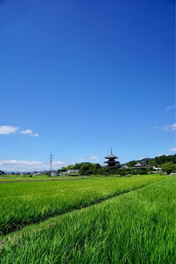 緑の水田と青空と三重塔がとても綺麗でした!