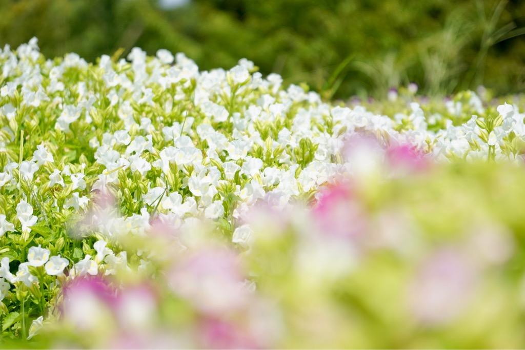 小さくて可憐なお花もいっぱいです。