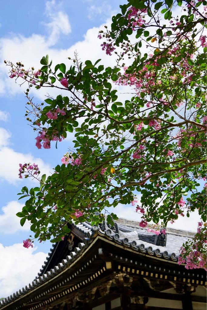 立派なサルスベリの木。とても綺麗でした。