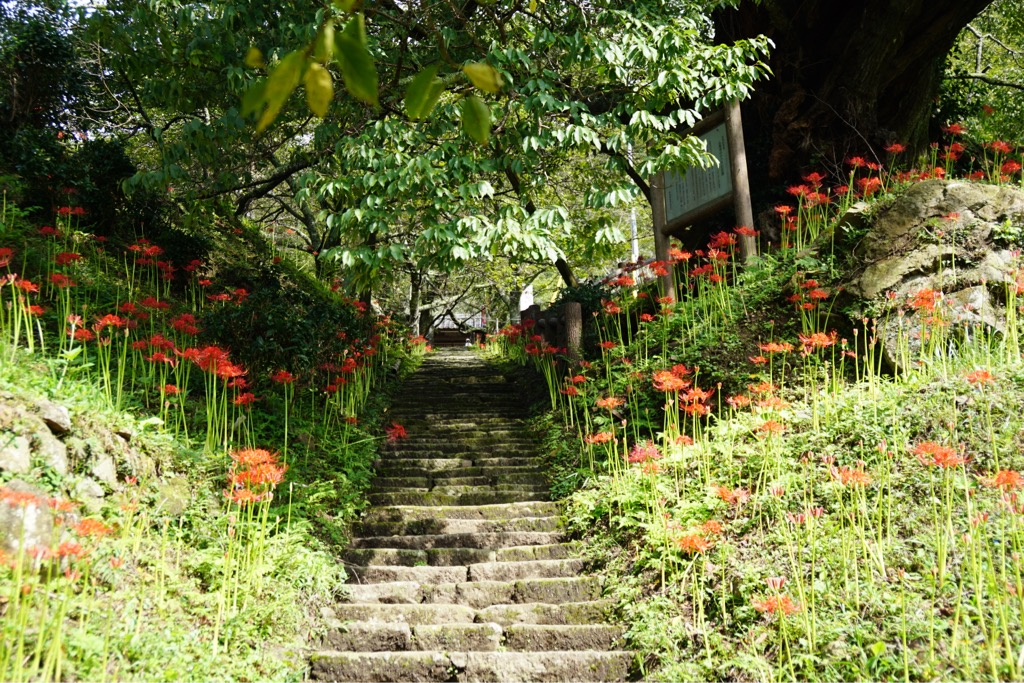 佛隆寺 大和3名段にも数えられる美しい参道です。