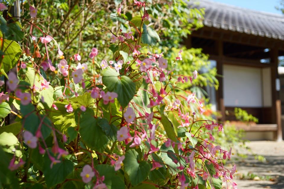 重衡桜 ピンクがなんとも言えず可愛かったです。