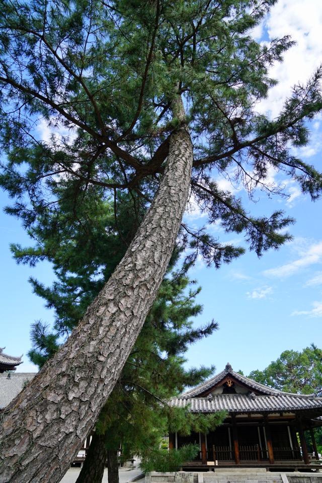 唐招提寺の木々はいつ見てもとても綺麗です。