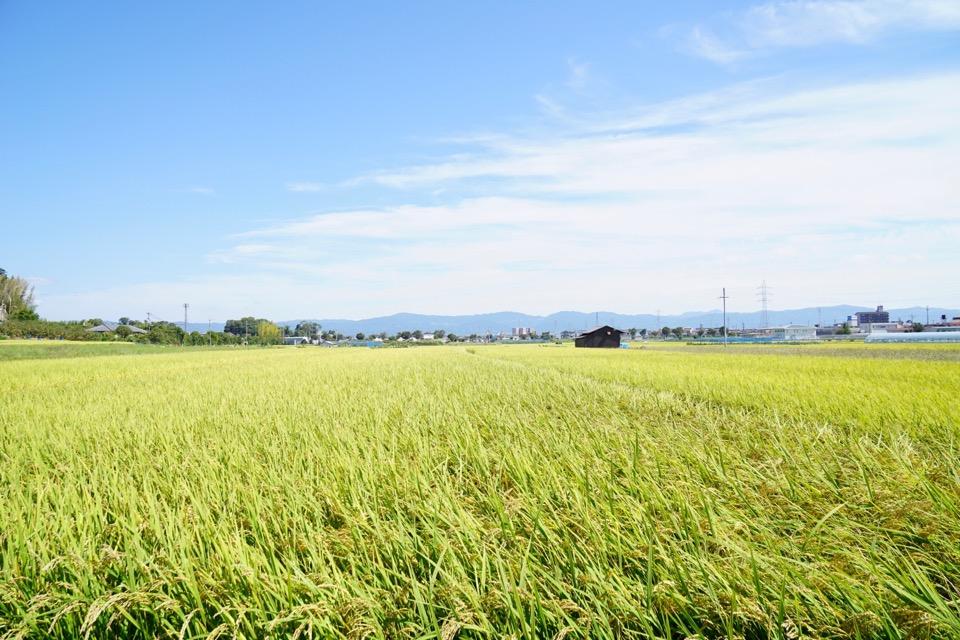 田んぼが広がり素晴らしい風景です。