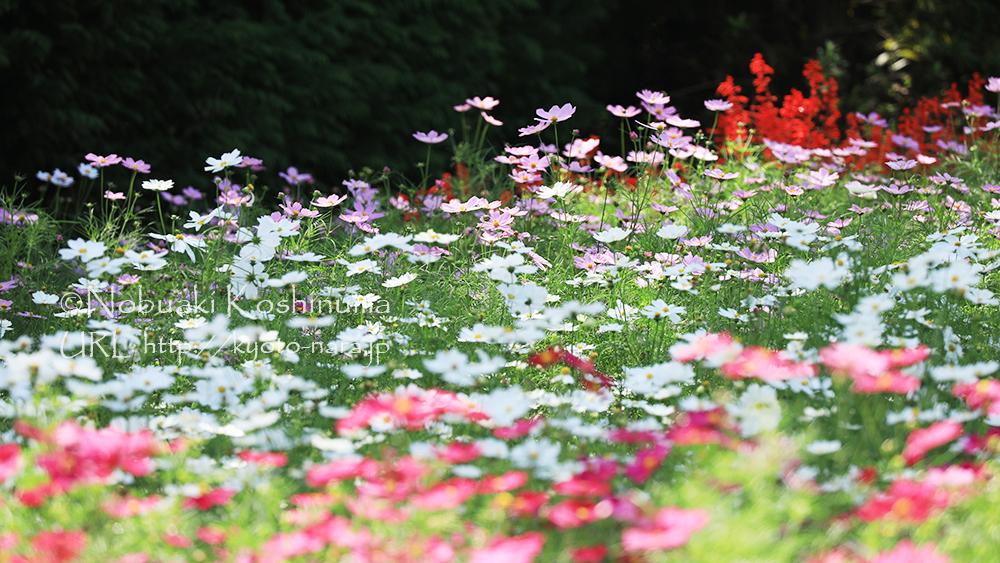 色とりどりの花が咲き誇ります。