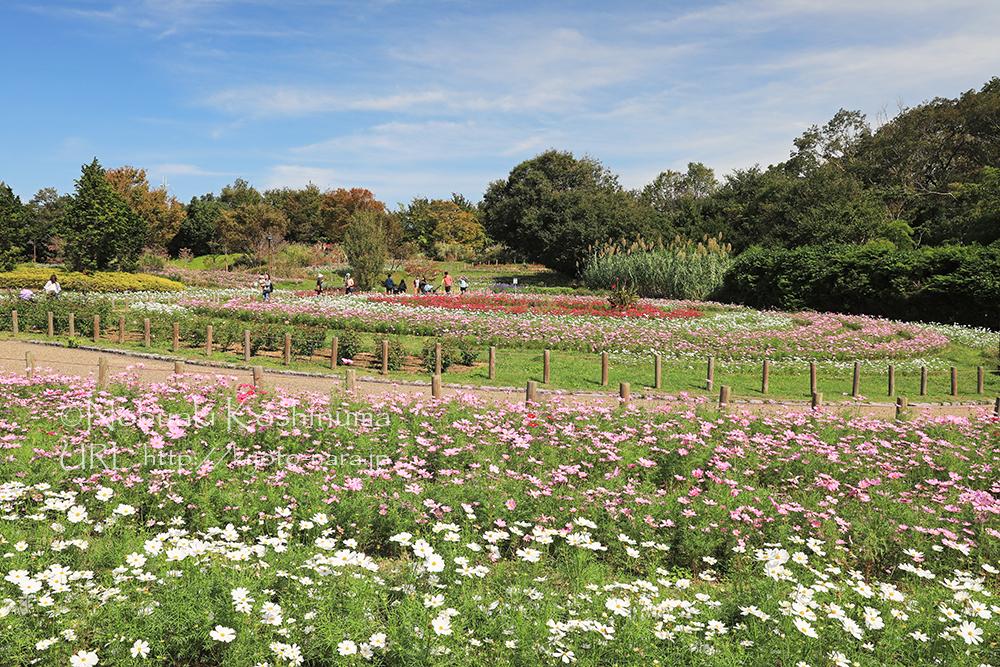 たくさんの花が中央エリアの花の道を飾ります。